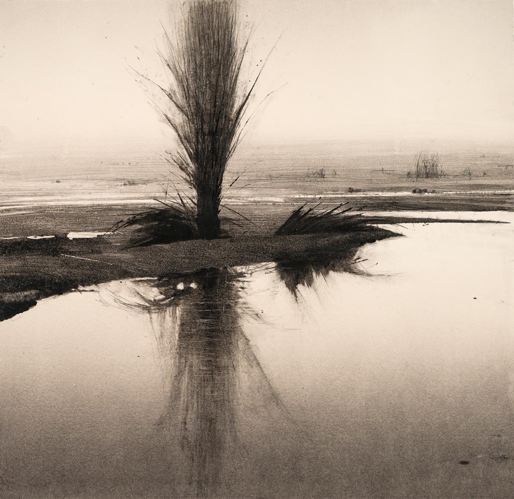 1.reflected-poplar