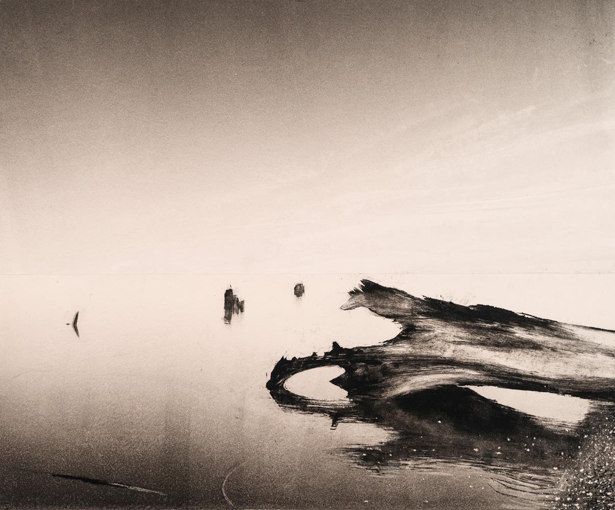 13.fallen-tree-dusk