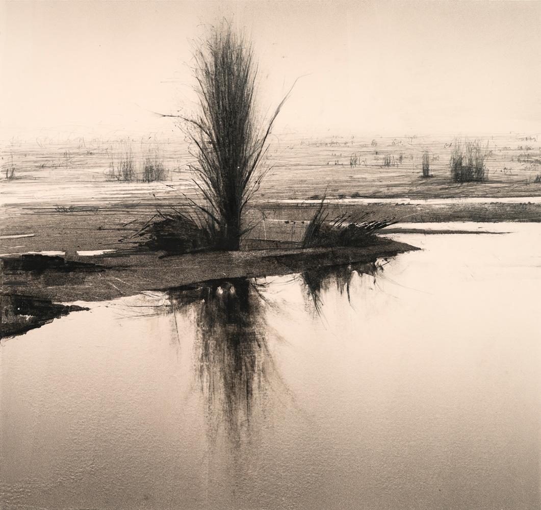 2.reflected-poplar-2
