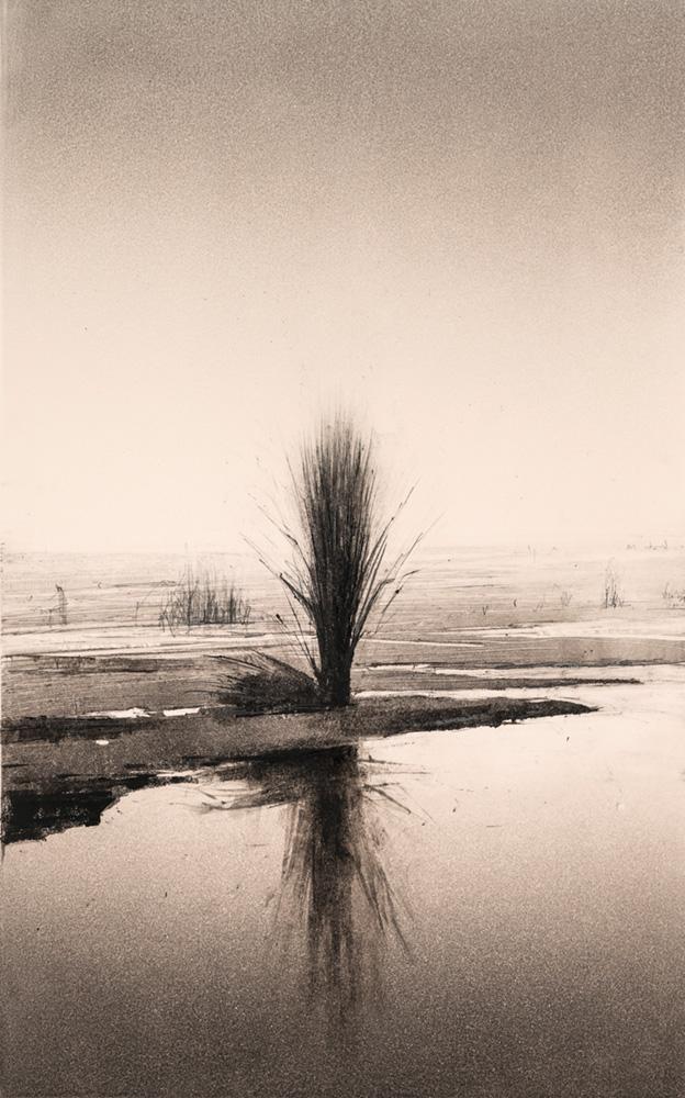 24.reflected-poplar-4