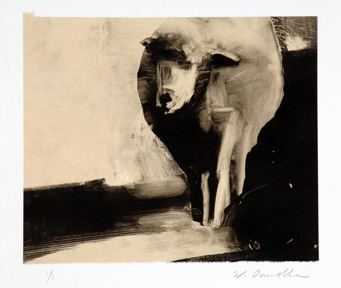 sheepwithshadow