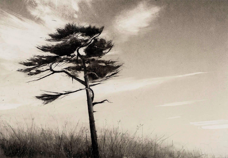 single-tree-port-townsend-no.2