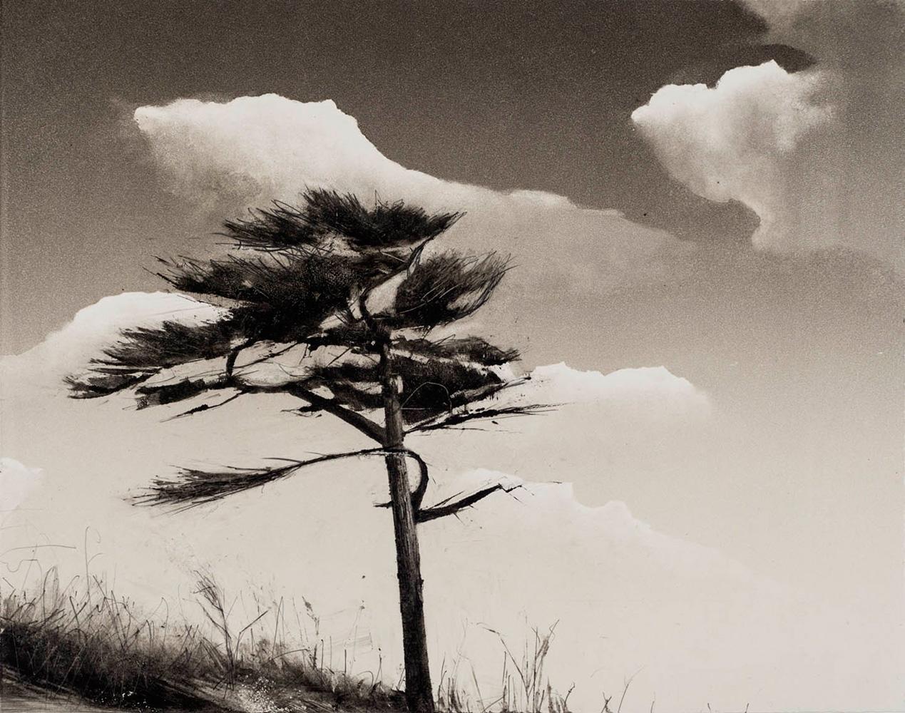 single-tree-port-townsend